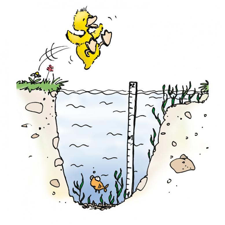 Ente springt ins Wasser.